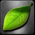 живые листья