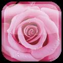 Роза живые обои