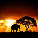 Скачать закат солнца в Африке