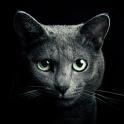 Найди кота - icon